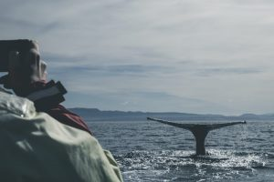 whale watching in north iceland under the long daylight hours of the midnight sun