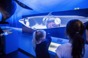 A small child enjoying the Whales of Iceland museum