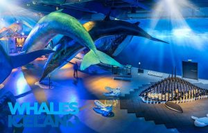 Whales of Iceland museum image